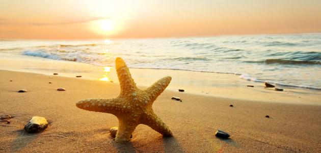 Ten top summertime service items