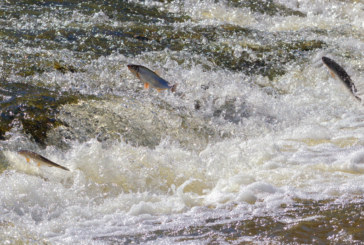 Should You Be Fishing Upstream?
